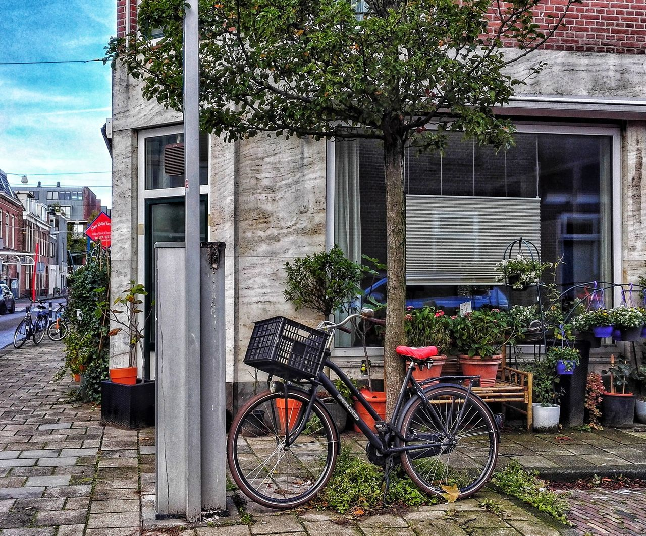 bicycle, building exterior, architecture, built structure, transportation, mode of transport, outdoors, day, land vehicle, stationary, no people, tree, plant, city, flower, nature