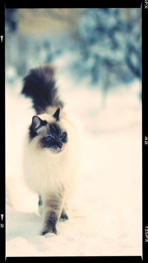 Cat snooooooooow