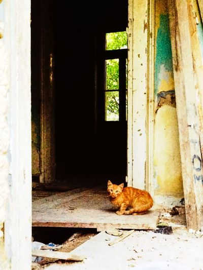 Cinnamon Stray Cat in Abandonedbuilding Cat Cats Cat Lovers Cats Of EyeEm Abandoned Places Abandoned Buildings EyeEm_abandonment Beauty Of Decay Beautyofdecay Light And Shadow Urban Exploration Urbanexploration Athens Greece