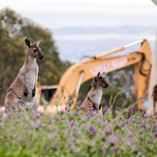 Wild Destruction EyeEm Selects Flower Standing Close-up Sky Kangaroo Blooming South Australia Wildflower