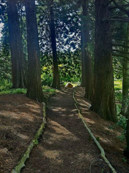 Tree Path Light And Shadow Mood Walking Around A Walk In The Woods Woods Nature Hamburg Jopesfotos - Nature