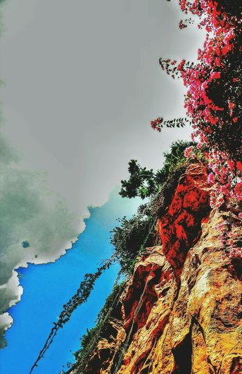 Cliff Cliffside Highcliffs Low Angle View Trees Flowers Creeping Plant Rock Formation Sky And Clouds Green And Red Brown Color Black Cloudy Sky Nature No People Traveling EyeEm Best Shots Taking Photos Macro Travelling Thailand EyeEm Gallery Casablanca Open Edit Relaxing Beauty In Nature Eyeem Gallary Hello World