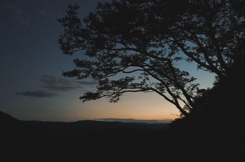 Silhouette tree against sky at sunset