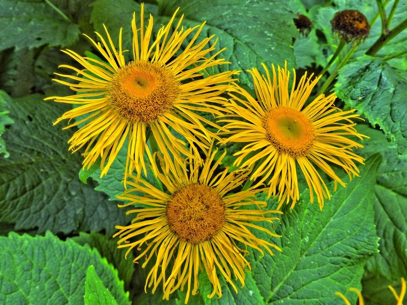 Beauty In Nature Blooming Botany Close-up Day Flower Flower Head Focus On Foreground Fragility Freshness Green Color Growing Growth In Bloom Leaf Natural Pattern Nature No People Outdoors Petal Plant Pollen Tranquility Yellow
