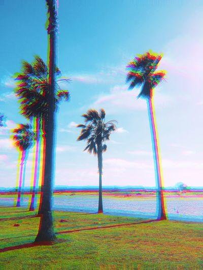 Palm Tree Beach Sky Water First Eyeem Photo