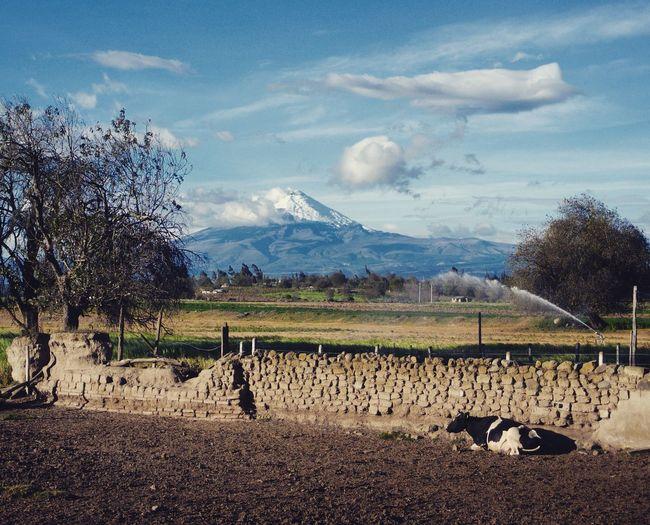 Countryside view Pujilí Ecuador Ecuador Nature Photography Mountain Cow Volcano Ecuadoramalavida Ecuadorpotenciaturistica Sky Sky And Clouds Landscape Landscape_Collection Landscape_photography Cotopaxi Cotopaxi Vulcano The Great Outdoors - 2017 EyeEm Awards