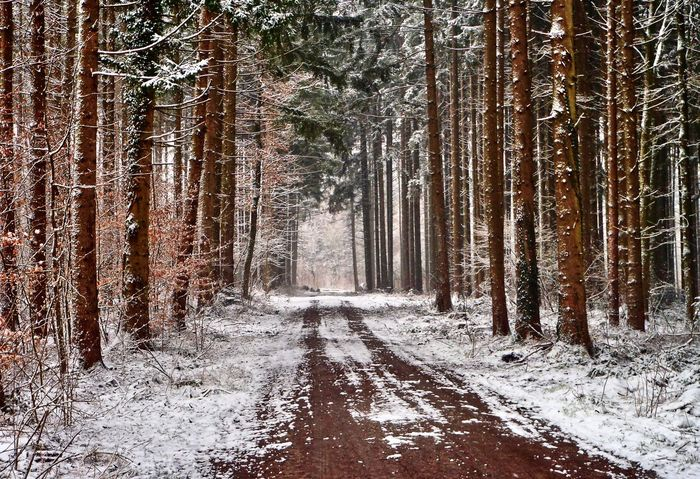 Winter im Wald Cold Temperature Forest Landscape Nature No People Outdoors Schnee Schwabenland Snow Tree Waldweg Weg Winter Winterwald