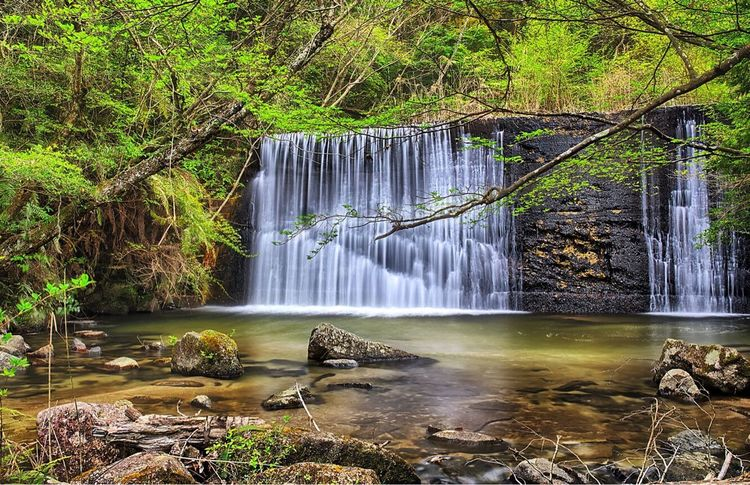 -Secret Falls- Waterfall Water Motion Scenics Beauty In Nature Long Exposure Nature Outdoors Tree No People Power In Nature Forest Day Iwayado Falls Japan Seto Sigma 35mm Art