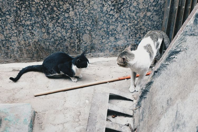 Two stray cats
