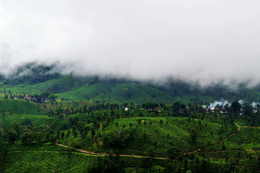 Rural Scene Tea Crop Landscape Nature Hill Top Rainy Days☔ Foggy Weather Hill Scenics Cultivated Land Valley Farm Environment Outdoors Valparai
