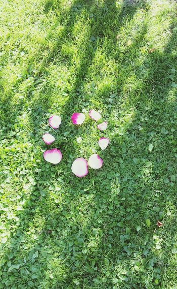 Flower Grass Garden Photography High Angle View Pink Growth Petal Green Color Freshness Nature Beauty In Nature First Eyeem Photo