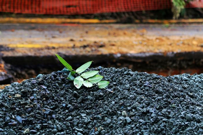 Beauty And The Beast Construction Green And Black Day Gravel Green Color Leaf Nature Versus Industry No People Outdoors Plant