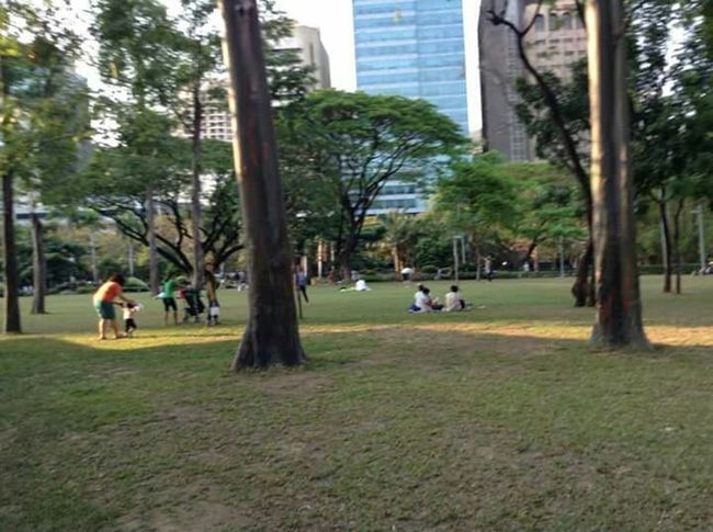 Taken at Ayala Triangle Gardens, Makati City. Enjoying Life Taking Photos Hanging Out Mobile Photography Nature Photography Eyeem Philippines The Moment - 2015 EyeEm Awards