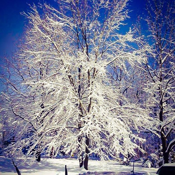 Cold Stayinside Winter Missspring Ice Snow Snowday White Blue Pretty Beautiful Trees Outside Nature Love Photooftheday Sunny Follow Instagood Instalike Like4like