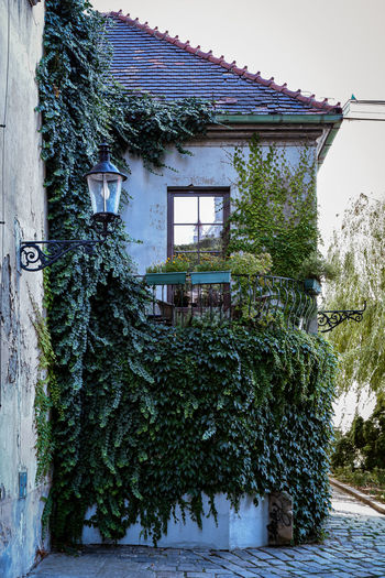 Ivy growing on old building against sky