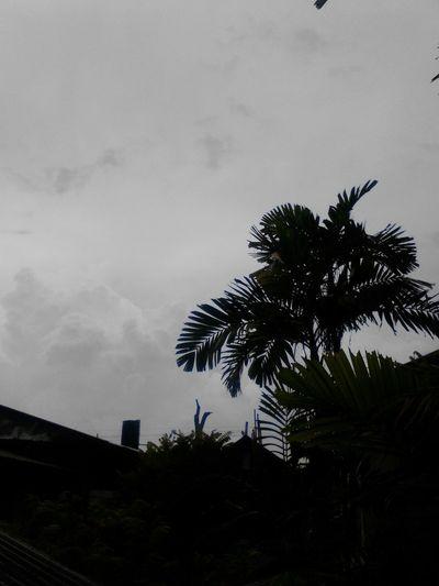 """After the rain"" Hello World ✌ Beautiful Popular Photos God's Creation"