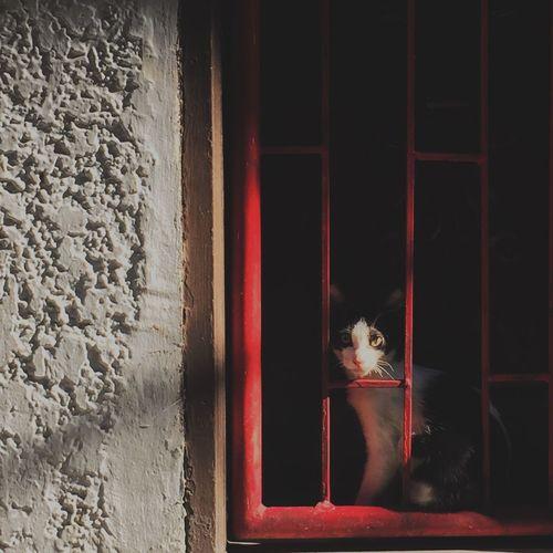 CatCali Pets Cats Of EyeEm Catcali Catsoftheworld