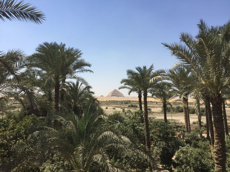 Egypt 🇪🇬 Dahshour Pyramid Plant Tree Sky Growth Nature Clear Sky No People
