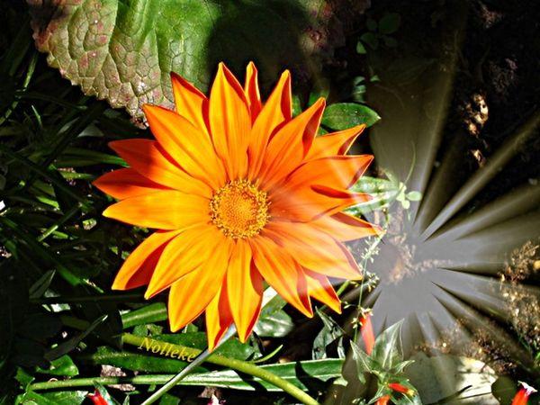 Good morning and happy Sunday! Flowerforfriends Floralperfection Flowerfantasy Flowerlove