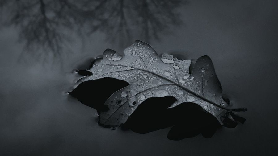 Autumn Leaves Autumn Water Leaf RainDrop EyeEmNewHere First Eyeem Photo EyeEm Nature Lover Smartphonephotography Blackandwhite Grey Rainy Day Science Close-up My Best Photo