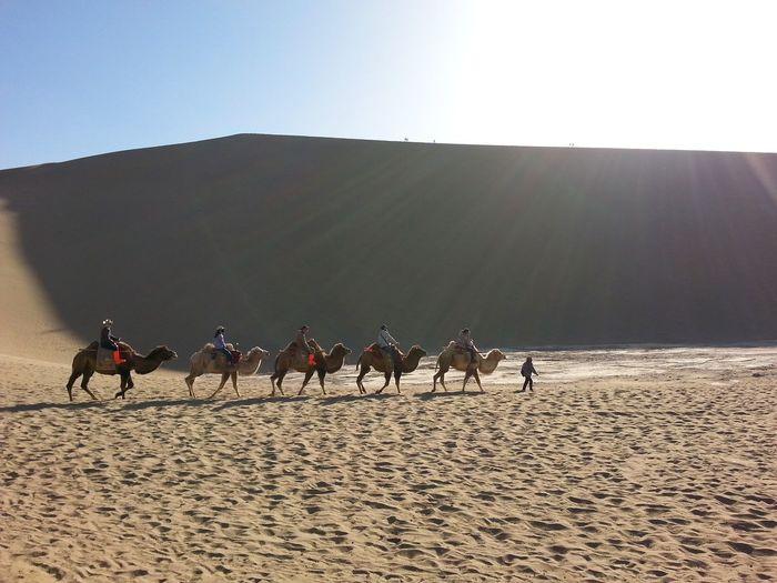 Desert DunHuang Gansu Province China l Sunshine