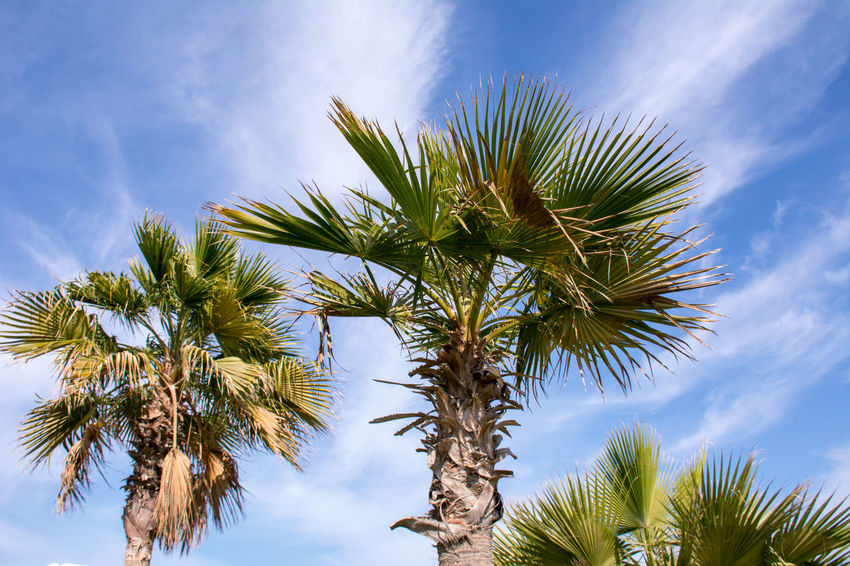 Captured by Beautiful Trees And Flowers Are In The Garden Beauty In Nature Blue Cloud - Sky Day Growth Low Angle View Nature No People Outdoors Palm Tree Plant Scenics Sky Tranquility Tree Tree Trunk