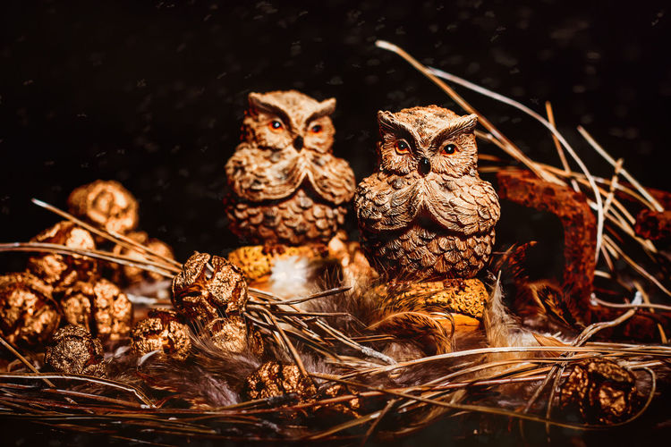 Owls in