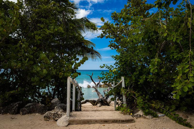 Barbados Barbados 2017 Beauty In Nature Blue Day Gatet Growth Nature No People Outdoors Paradise Paradise Beach Scenics Shadow Sky Sunlight Tree