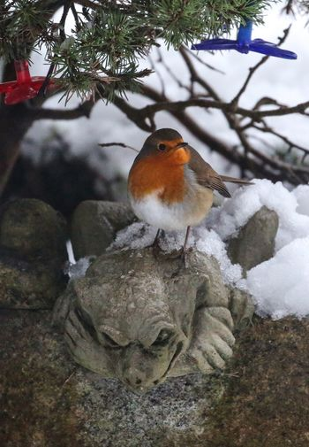 The robin and the gargoyle. Gargoyle Animal Bird Animal Themes Animal Wildlife Cold Temperature Animals In The Wild No People Tree Winter Nature Plant Snow Day Branch One Animal Perching Robin Close-up