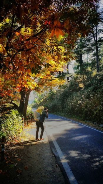 Basking For A Moment Beauty In Nature Gpmzn Shot With A Leica EyeEm Best Shots Leica Photography. Great Morning Glowing Light Glowing Tree The Glow Of Yellow Backlight Glow Pictorial The Beauty Of Nature The Beauty Of Ranikhet Jungle Road Capture Tomorrow Tree Water Full Length Men Car Sky