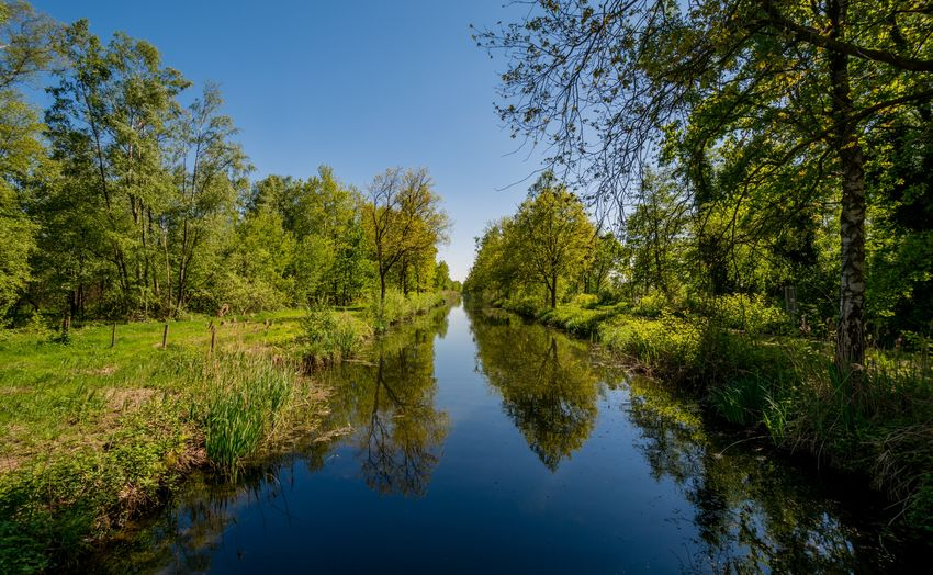 """Dutch canal in national parc """"de Groote Peel"""" Ospel National Park Netherlands Nederland De Groote Peel Nature Nature Photography Landscape Water Tree Water Reflection Blue Sky"""