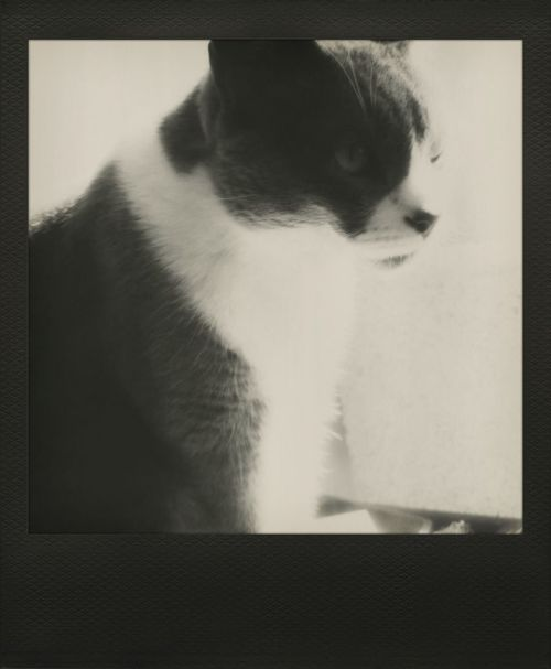Cat♡ Bw_ Collection Polamatic