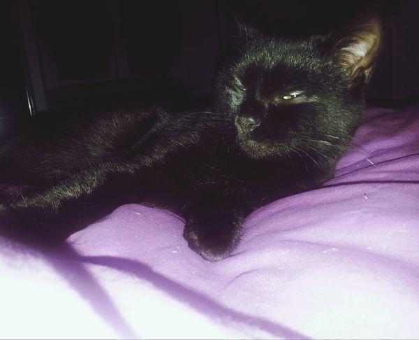 Cat Killer Eyes I Am The Devil ...