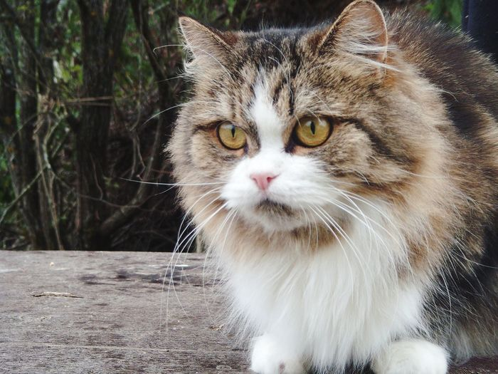 Matilda Pets Water Feline Domestic Cat Whisker Portrait Close-up Cat Yellow Eyes At Home Animal Eye Animal Face Animal Nose Home Kitten