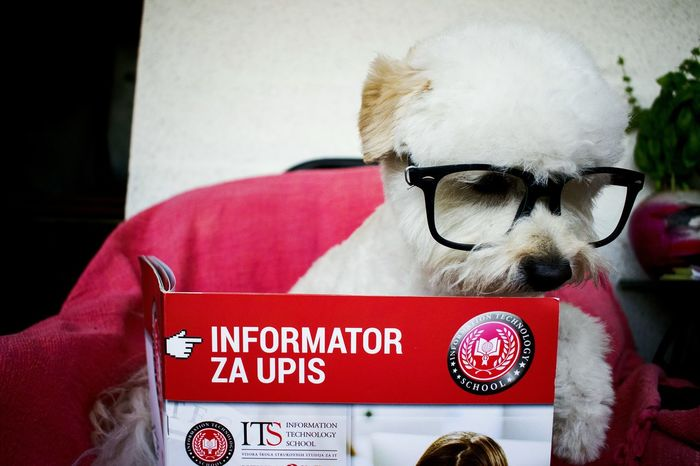 Red Eyeglasses  Mypup Reading A Book Smartypants Photooftheday White Love Happiness Animal Themes Smartanimals