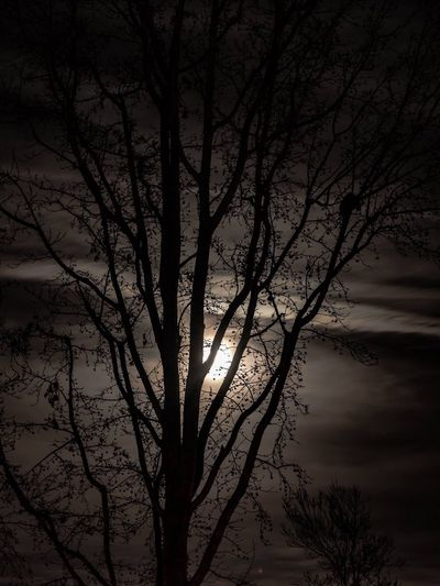 Moonlit tree Tree Nature Bare Tree Branch Tranquility Silhouette Beauty In Nature Sky No People Scenics Tranquil Scene Outdoors Night Illuminated