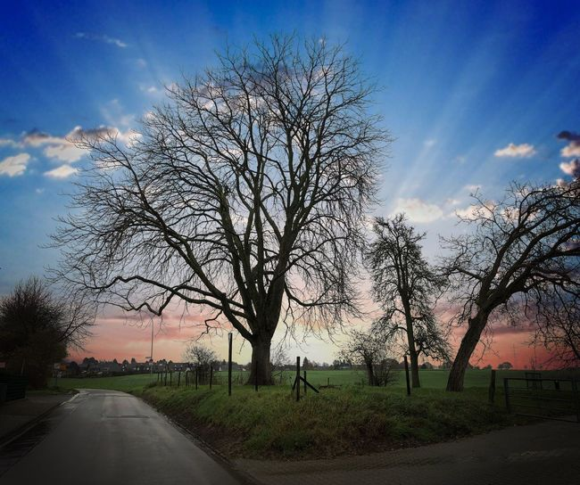 Tree Sky Bare Tree Road Cloud - Sky Landscape Outdoors The Way Forward Nature Beauty In Nature No People Day Landscape_Collection Creative Light And Shadow