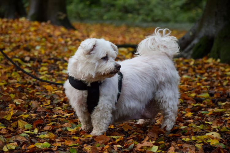 White dog on leaves during autumn