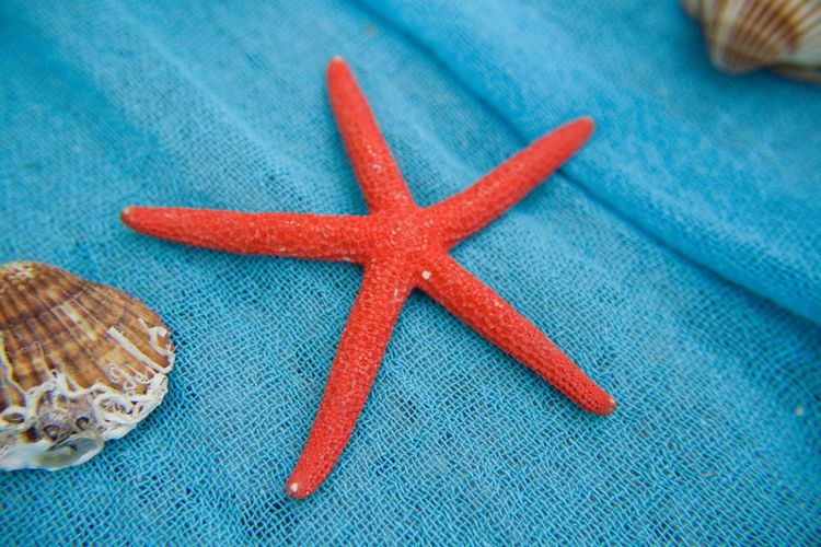 Close-up of artificial starfish and seashells on fishing net
