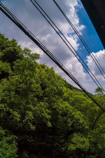 EyeEm Nature Lover EyeEmNewHere Architecture Beauty In Nature Built Structure Cable Cloud - Sky Connection Day Foliage Forest Green Color Growth Low Angle View Lush Foliage Nature No People Outdoors Plant Sky Street Streetphotography Tranquility Tree