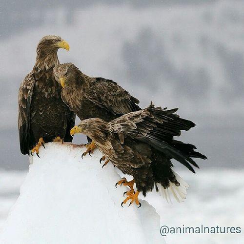 Kartal Eagle Awesome Amazing picoftheday animals wildlife nature followme bestofphoto