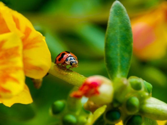 #closeup Flower