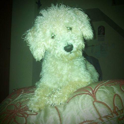 ❤ Amoresperros Instadogs Dogsofinstagram Dogstagram Dogoftheday Dog