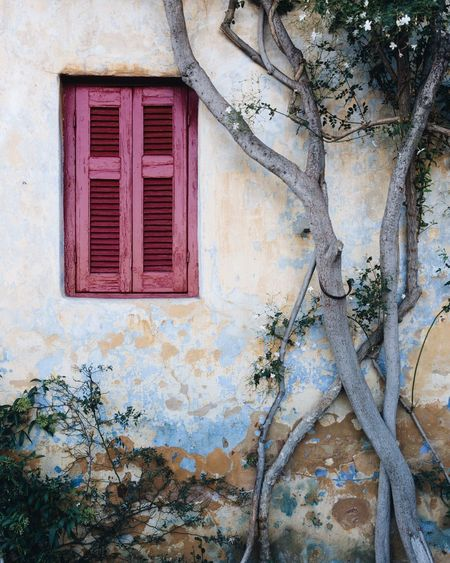 Window Built Structure Purple No People Weathered Building Exterior Architecture Plant Old-fashioned Rural Scene Branch Tree Rotting