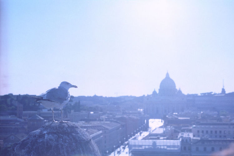 Architecture Building Exterior Day Cityscape Built Structure Outdoors City Sky No People See The Light Scenics Be. Ready. Leisure Activity Looking At View Bird Road Street Expired Film Expired Film Roma Vatican Seagull Sunlight The Way Forward Moving Around Rome Stories From The City
