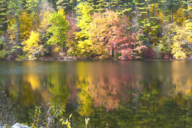 Ashley Resevoir Autumn Beauty In Nature Branch Change Day Forest Growth Holyoke MA Idyllic Lake Nature Outdoors Reflection River Scenics Season  Tranquil Scene Tranquility Tree Water Waterfront