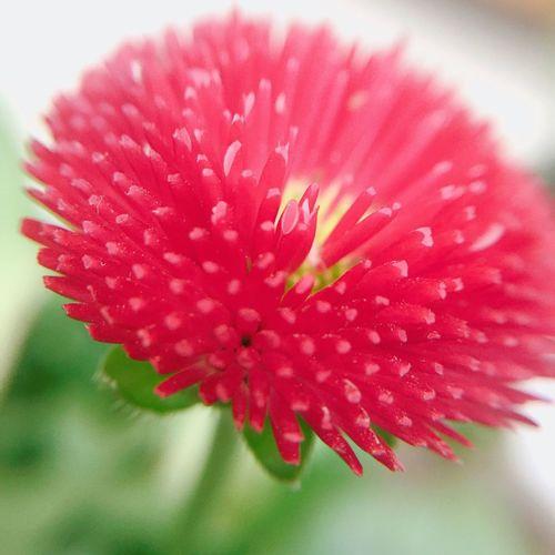Hi! Hello World EyeEm Nature Beautiful Colors Flowers Red Macro