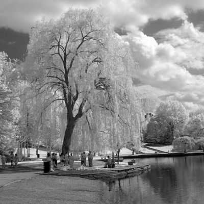 IMG_2401 by polishamericanphotographer on Flickr. Just follow this link to see and comment on this photo: https://flic.kr/p/t8bX8u Cleaveland CLE  Cleveland ClevelandOhio1796 Ohio UniversityCircle WadeLagoon CuyahogaCounty EastSide Water Beautifulohio Blackandwhite Blacknwhite Infrared CanonG11 InfraredCanonG11 Canon TeamCanon Digitalcamera Digitalphotography Digitalphoto PointNShot PointandShot Powershot ThisisCLE