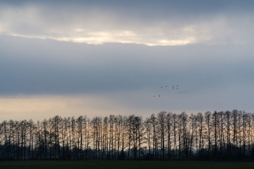 Landsscape photography in the area of Oderbruch in Germany. Animal Themes Beauty In Nature Bird Cloud - Sky Day Flying Grass Landscape Mountain Nature No People Outdoors Scenics Sky Sunset Tranquil Scene Tranquility Tree Treeline