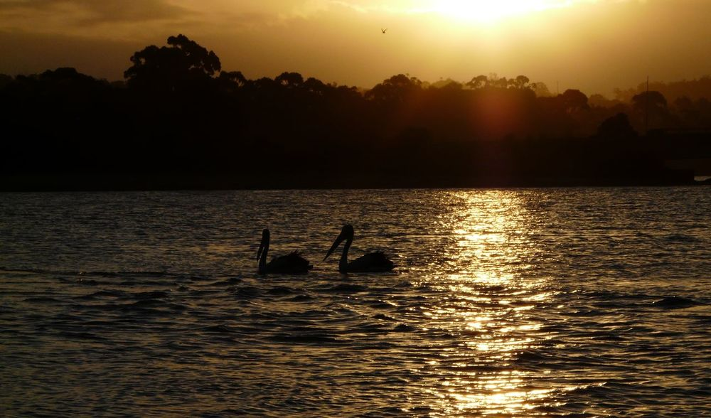Beauty In Nature Birds_collection Idyllic Mogareeka Nature Non-urban Scene Orange Color Outdoors Pelicans Reflection Rippled Scenics Sky Sun Sunlight Sunset Sunset #sun #clouds #skylovers #sky #nature #beautifulinnature #naturalbeauty #photography #landscape Sunset_collection Tathra Tranquil Scene Tranquility Water